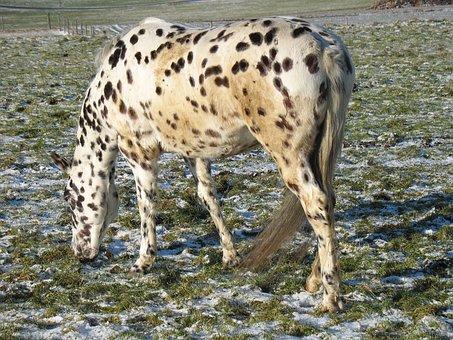 Animal, Animal World, Mammal, Nature, Wild, Horse, Mold