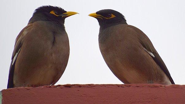 Bird, Wildlife, Nature, Animal, Feather, Wing, Beak