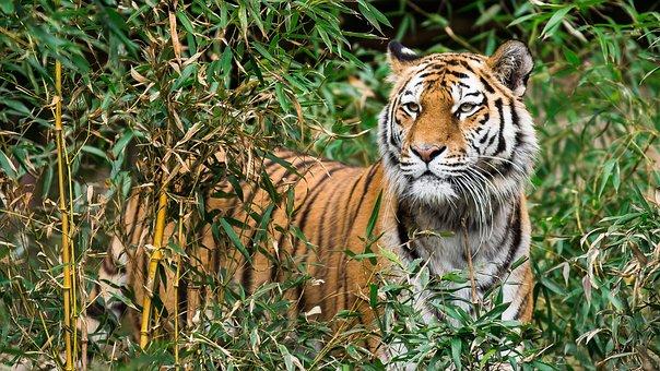 Animal World, Nature, Jungle, Animal, Carnivores