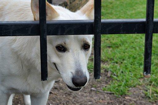 Security, Guard Dog, Mammal, Animal, Nature, Grass, Dog