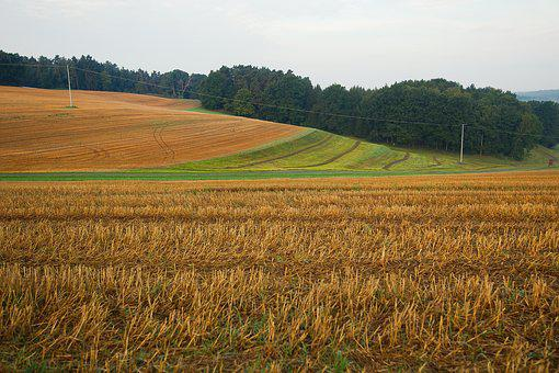 Agriculture, Field, Harvest, Wheat, Farm, Landscape