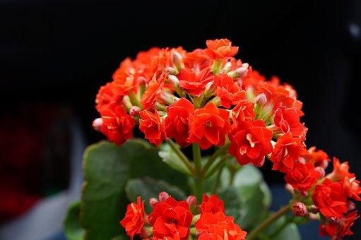 Flower, Nature, Flora, Petal, Leaf, Plant, Blossom