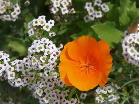 Flower, Flora, Nature, Summer, Floral, Blooming, Garden