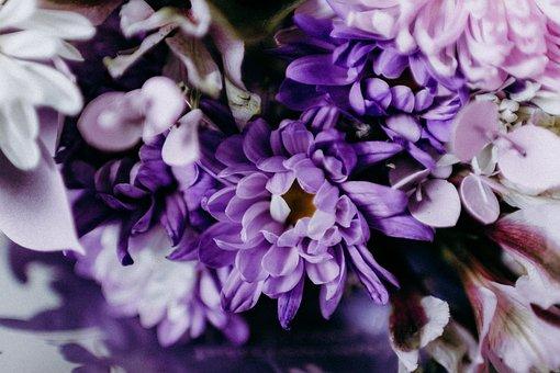 Flower, Flora, Nature, Floral, Petal, Garden, Blooming