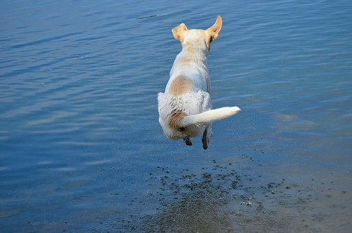 Dog, Cannonball, Jump, Jump Into The Water, Water, Blue