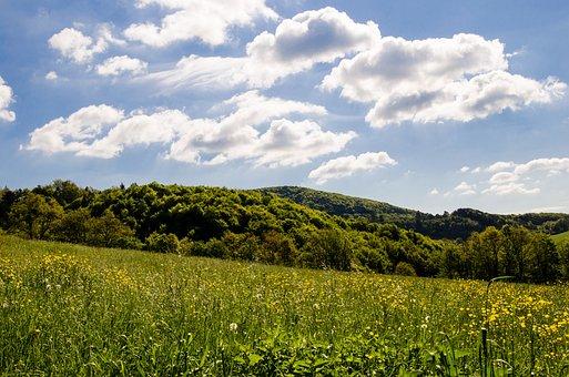 Meadow, Flowers, Summer, Summer Day, Flower Meadow