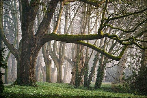 Forest, Fog, Morning, Morgenstimmung, Fantasy