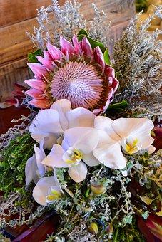 Flower Bouquet, King Protea, Orchid, Flower, Nature
