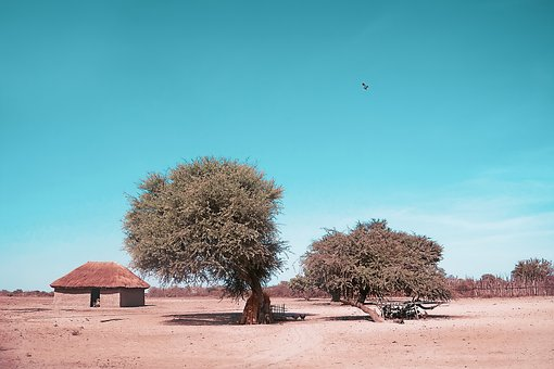 Tree, Sky, Nature, Africa, Hut, Lunch, Heat, Shadow