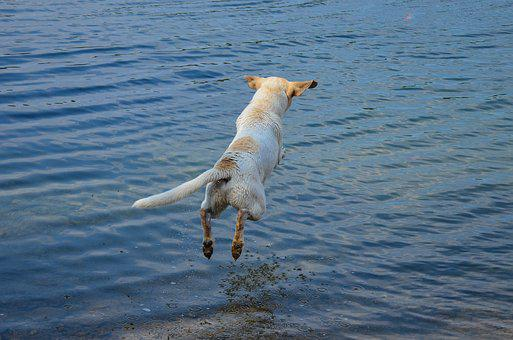 Dog, Pet, Friend, Jump, Water, Summer, Play, Lake