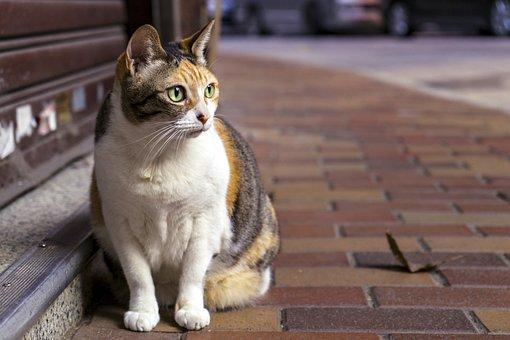Cute, Animal, Portrait, Looking For, Cat, Sat, Pets