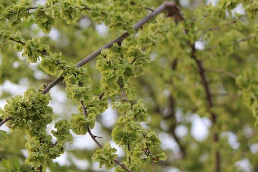 Tree, Plant, Nature, Sheet, Branch, Shoots, Environment
