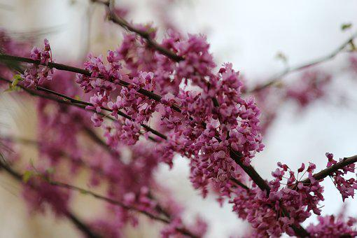 Flower, Tree, Branch, Cherry, Nature, Season, Plant