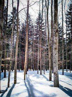 Wood, Snow, Winter, Tree, Nature, Season, Frost