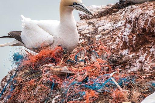 Dead Bird, Safety Net, Spirit Network, Plastic Waste