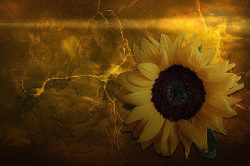 Sun Flower, Summer, Sun, Dreamy, Fantasy, Background