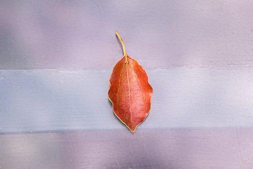 Leaf, Background, Nature, Texture, Color, Plant, Mode