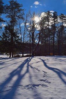 Winter, Snow, Shadow, Tree, Sun, Season, Frost, Cold