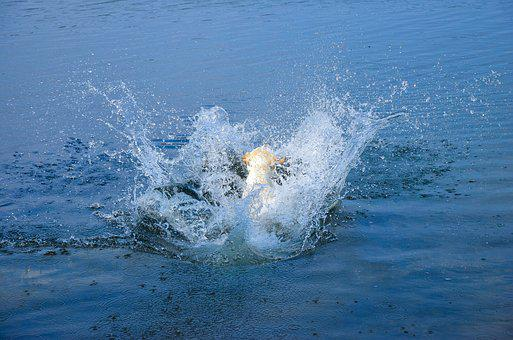 Jump, Cannonball, Summer, Play, Water, Dog, Pet, Friend