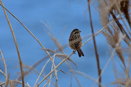 Natural, Outdoors, Sky, Bird, Wild Animals