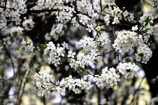 Spring, Flower, Tree, Plant, Branch, Season, Blooming