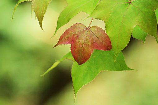 Leaf, Nature, Plant, Close-up, Outdoor, Compact