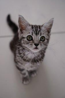 Cat, Cute, Animal, Pet, Kitten, Baby Cat, Young Kittens