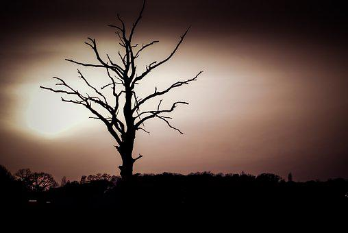 Tree, Dry, The Silhouette, Konary, Branches