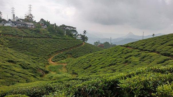 Nature, Agriculture, Hill, Landscape, Field, Farm