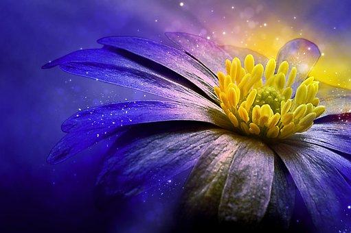 Balkan Anemone, Flower, Blossom, Bloom, Blue, Anemone