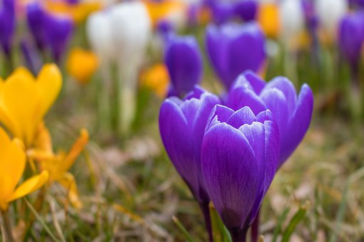 Nature, Flower, Plant, Garden, Season, Easter, Spring