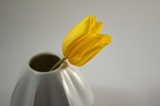 Tulip, Flower, Vase, Yellow, Spring, Flowers