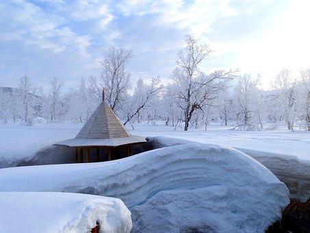 Winter, Leann, Frost, Forest, Hot Springs, Trees, Birch