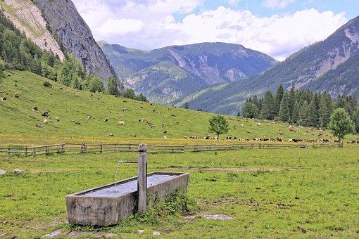 Nature, Mountain, Landscape, Grass, Travel, Wood, Sky