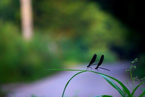Insects, Nature, Outdoors, Leaf, Garden, Morning