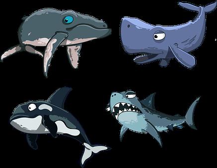 Kit, Sperm Whale, Shark, Killer Whale, Humpback Whale