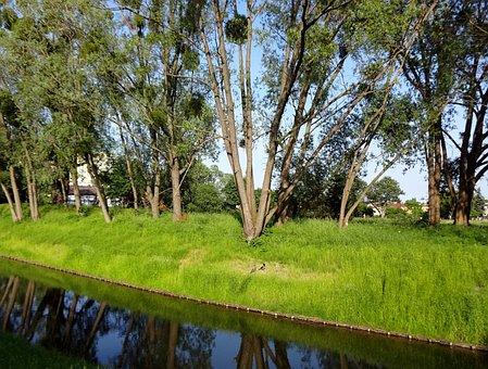 Tree, Lawn, Nature, Landscape, Plant, Summer