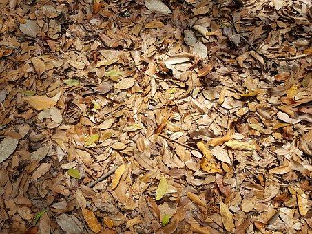 Batch, Dry, Pattern, Desktop, Nature, Pile, Leaf