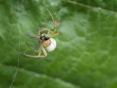 Nature, Spider, Insect, Animal World, Arachnid, Close