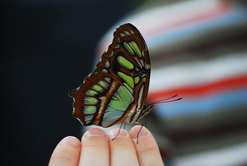 Butterfly, Insect, Nature, Wing, Child, Hand, Learn