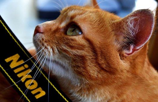 Cat, Mackerel, Nikon, Photograph, Wildlife Photography