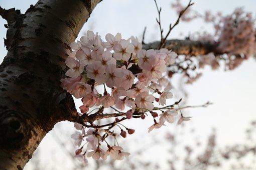 Wood, Quarter, Season, Nature, Outdoors, Flowers