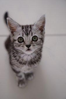 Cat, Cute, Pet, Animal, Portrait, Mammal, Animal World