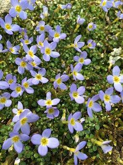 Flower, Nature, Flora, Garden, Leaf, Purple, Wildflower
