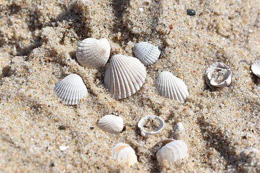 Seashell, Sand, Beach, The Coast, Shells, Sea