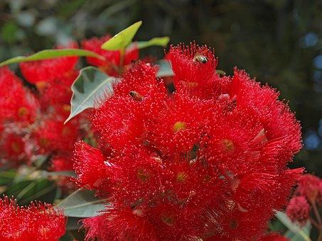 Nature, Leaf, Flora, Garden, Summer, Flower, Season