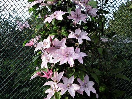Flower, Plant, Nature, Garden, Sheet, Summer, Blooming