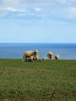 Cornwall, England, Sea, Nature, Grass, Sky, Landscape