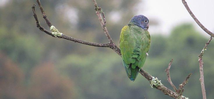 Wild Life, Nature, Birds, Tree, Animalia