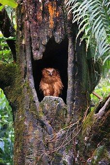 Tree, Wood, Nature, Tropical, Jungle, Rainforest